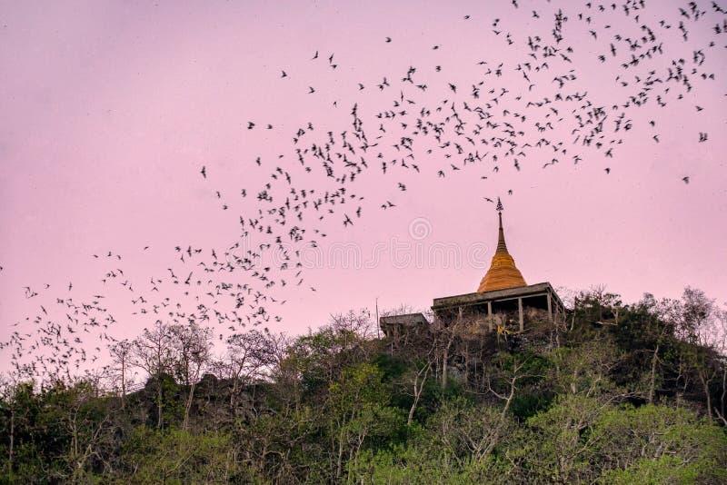 Troupeau du vol de chauve-souris par la pagoda d'or à chasser la nourriture image libre de droits