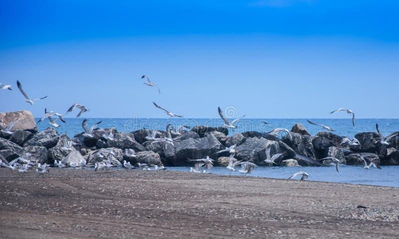 Troupeau volant des mouettes le lac Michigan photos libres de droits
