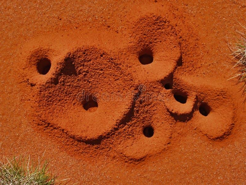 Trous de fourmi de Spinifex photos libres de droits