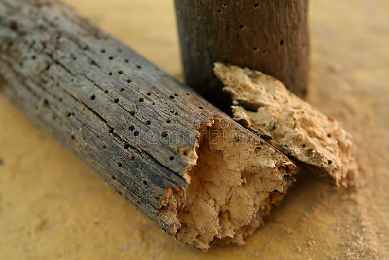 Trous de ver de bois images libres de droits