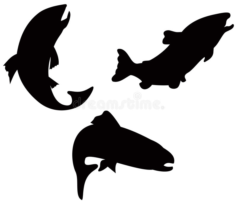 Trout. Vector art on trout silhouettes on white background royalty free illustration