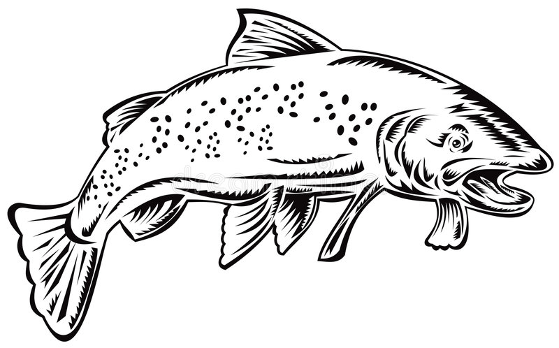 Trout. Vector art of a trout isolated on white background royalty free illustration