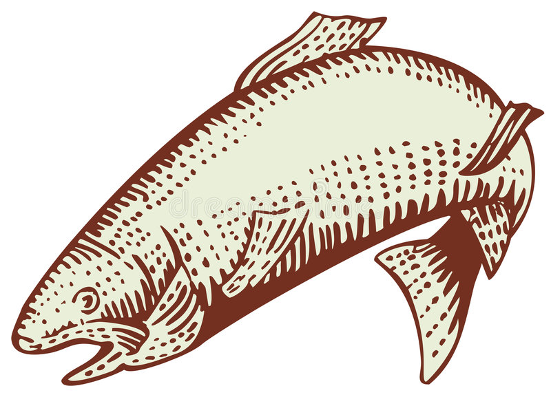 Trout. Vector art of a trout isolated on white background stock illustration