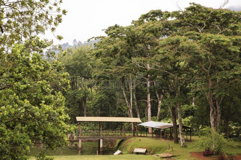 Trout farm - Zomba royalty free stock photography