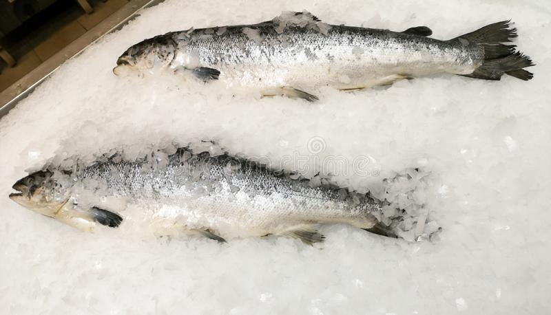 Trout fish in the ice in the store.  stock image