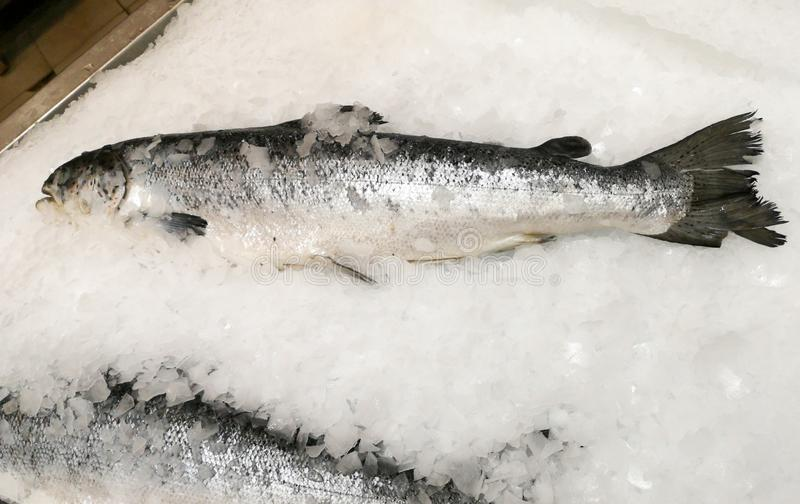 Trout fish in the ice in the store.  royalty free stock photography