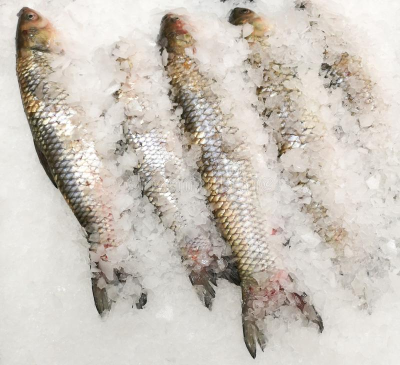 Trout fish in the ice in the store.  royalty free stock photos