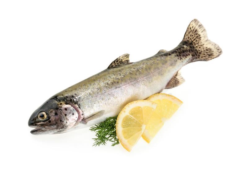Trout fish isolated on white royalty free stock images