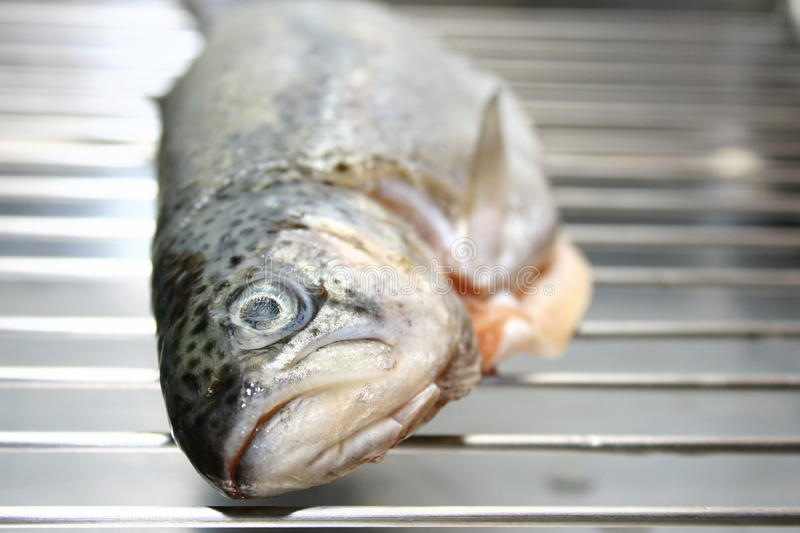 Trout on grill stock photo