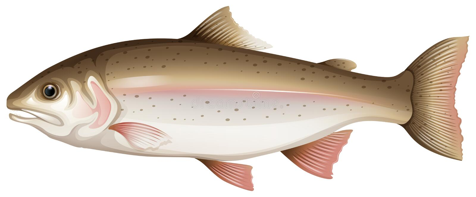 Trout. Illustration in fine detail royalty free illustration