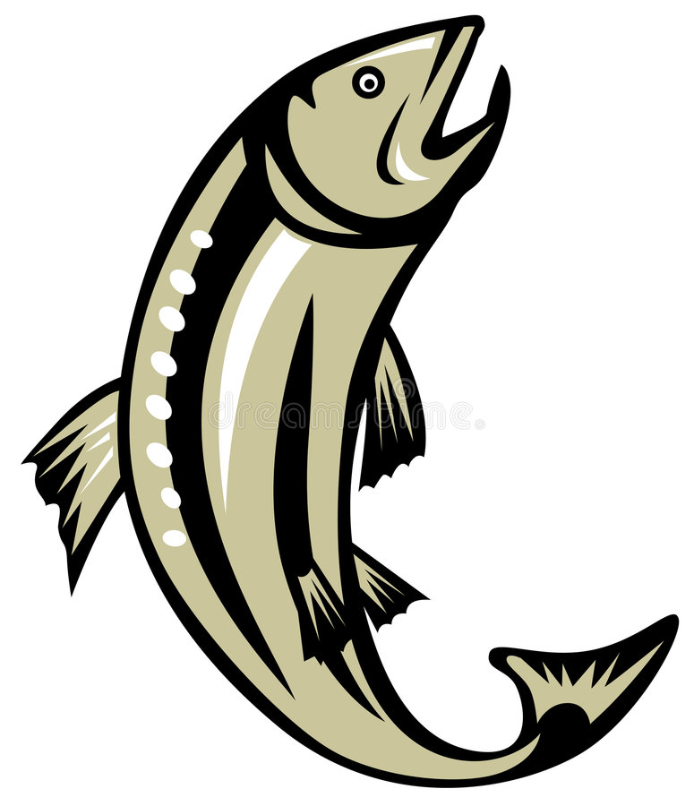 Trout jumping. Vector art of a Trout jumping isolated on white vector illustration