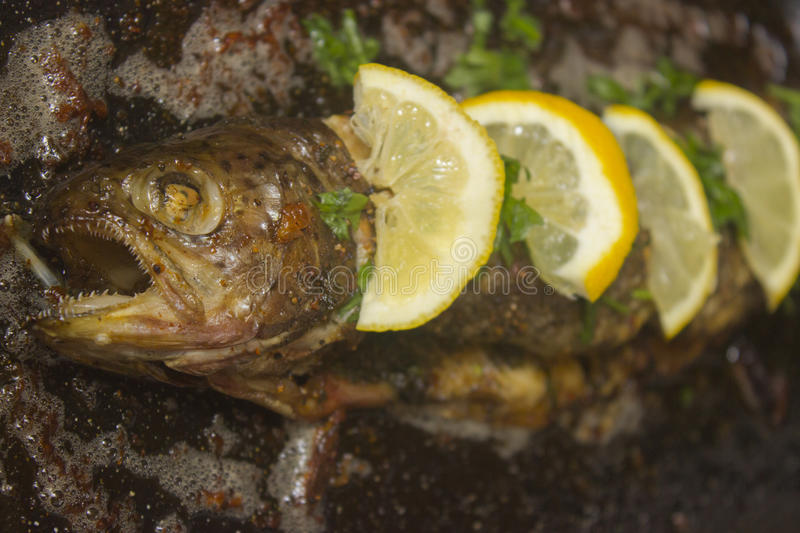 Trout from the ove stock photography