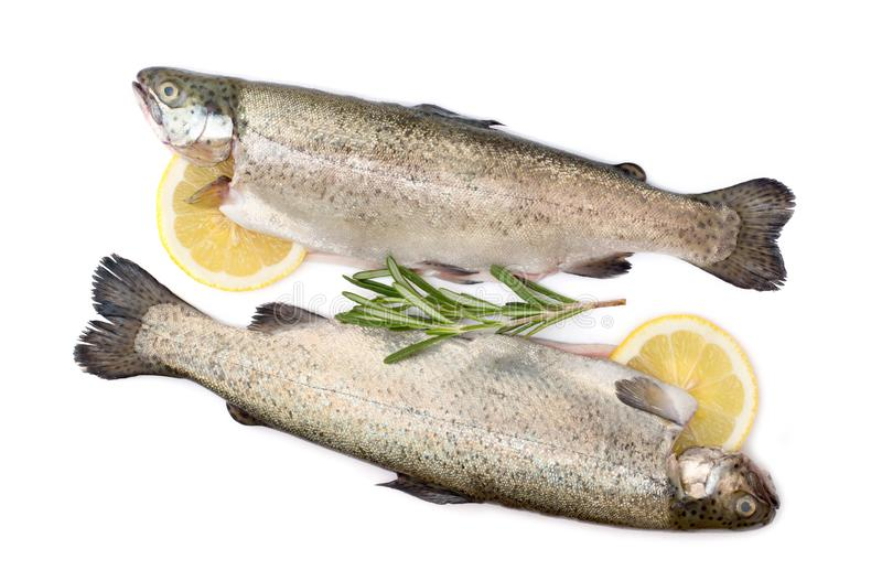 Trout raw fish with lemon and rosemary isolated on white background. Closeup stock images