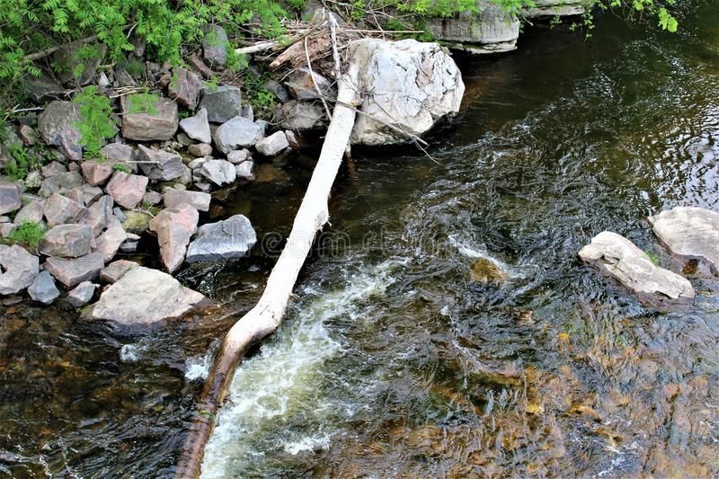 Trout River Stream, Franklin County, Malone, New York, United States. Green vegetation covered Trout River Stream, located in Franklin County, Malone, New York stock images