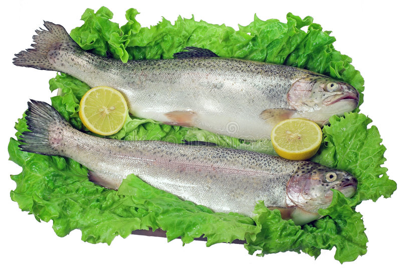 Download Trouts stock image. Image of obesity, thin, healthy, lettuce - 396327