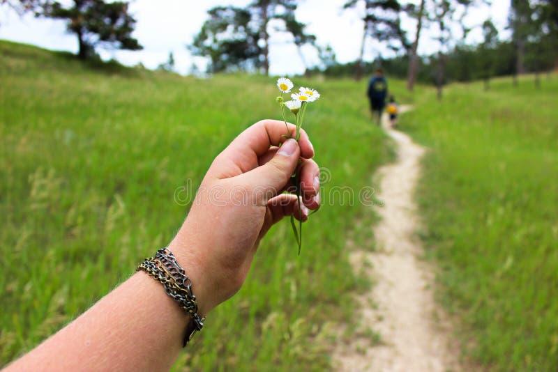 Trouvez la beauté sur le chemin battu photo stock