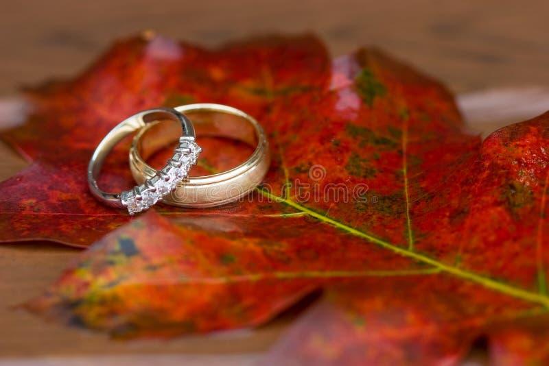 Trouwringen in de herfst royalty-vrije stock foto