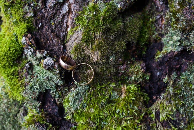 Trouwringen op de achtergrond van het bos royalty-vrije stock fotografie
