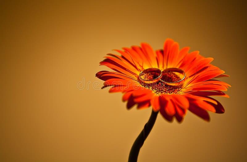 Trouwringen op de bloem royalty-vrije stock foto's