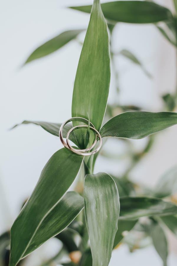 Trouwringen op een groene bamboebladeren stock foto's