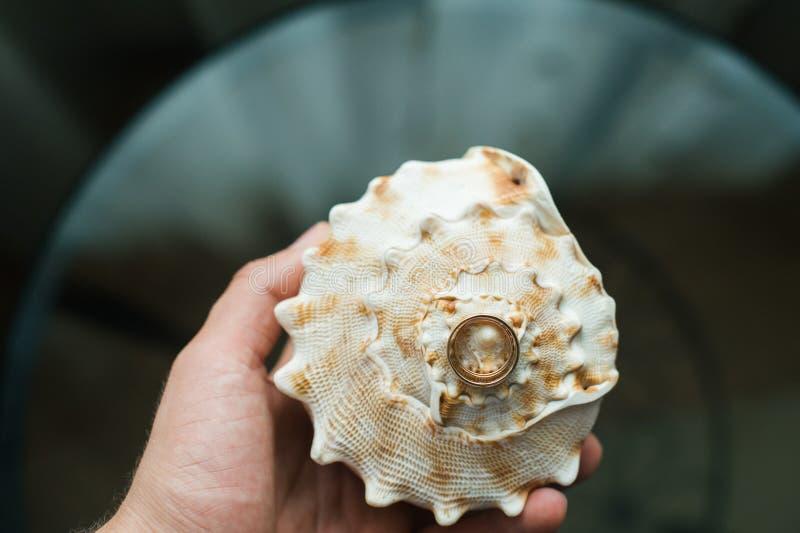 Trouwringen op een zeeschelp stock fotografie