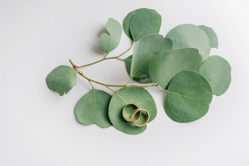 Trouwringen op eucalyptusbladeren stock foto's