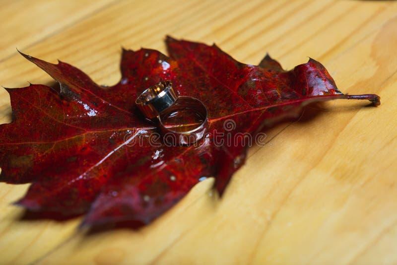 Trouwringen op rode bladeren met witte houten achtergrond royalty-vrije stock fotografie