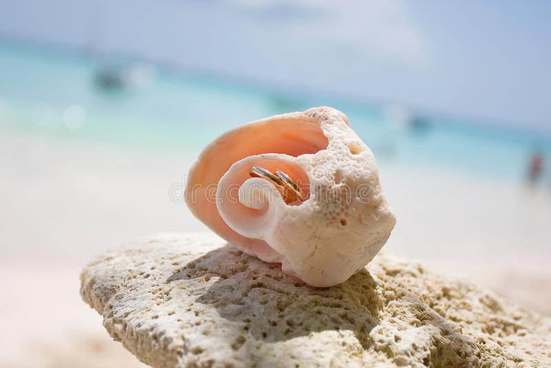 Trouwringen in shell royalty-vrije stock afbeeldingen