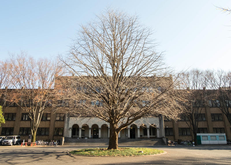 Trtrees sfrondati di bella perfetto-forma nell'inverno davanti a costruzione nell'università di Tokyo immagini stock libere da diritti