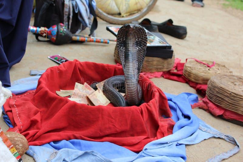Trucco del serpente immagine stock