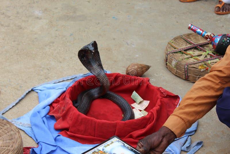 Trucco del serpente fotografia stock libera da diritti