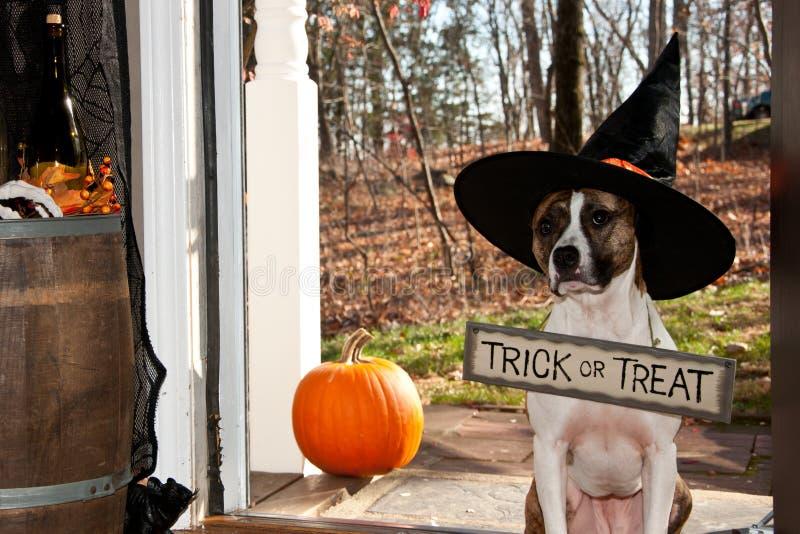 Trucco o trattamento sveglio del cane fotografie stock libere da diritti