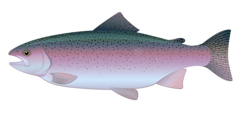 Trucha de arco iris ilustración del vector