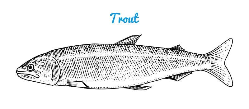 Trucha del río y pescados del lago Criaturas del mar Acuario de agua dulce Mariscos para el menú Mano grabada dibujada en viejo v stock de ilustración