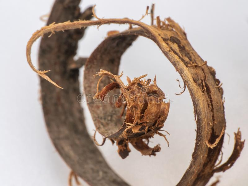 trucioli spirale torta Ricciolo di legno fotografia stock