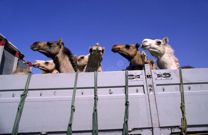 Download Truck καμηλών στοκ εικόνες. εικόνα από ουρανός, καμήλα - 2231844
