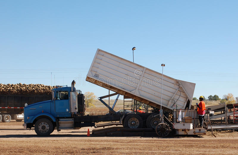 Truck dumping sugarbeets at a Western Sugar pile ground during fall harvest. Truck dumping sugarbeets at a Western Sugar pile ground at fall harvest royalty free stock photos