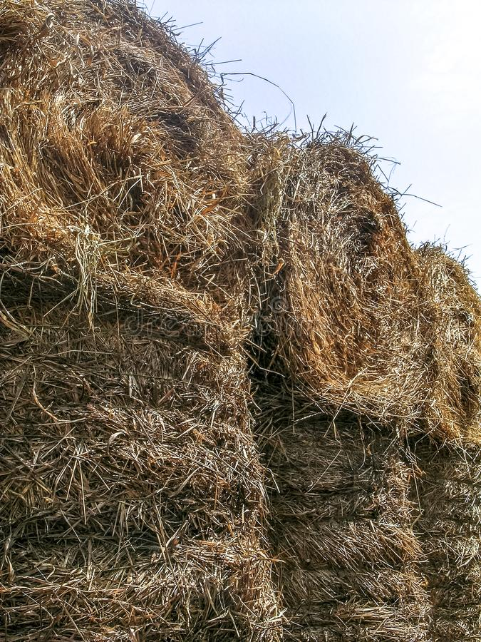 Truck loaded with hay to be used as feed for cattle. In Brazil royalty free stock photography