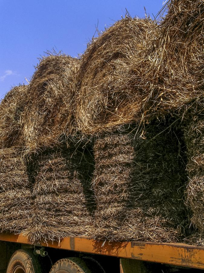 Truck loaded with hay to be used as feed for cattle. In Brazil royalty free stock image