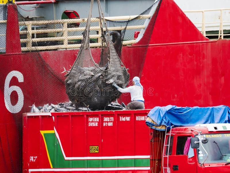 Truck loading tuna in Gensan City, the Philippines. General Santos City, The Philippines - October 16, 2018: Frozen yellowfin tuna being loaded onto a truck from royalty free stock photos