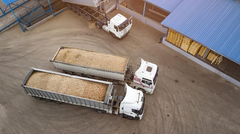 Trucks with potatoes at the potato processing factory top view royalty free stock image