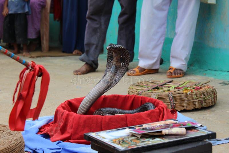 Truco de la serpiente foto de archivo