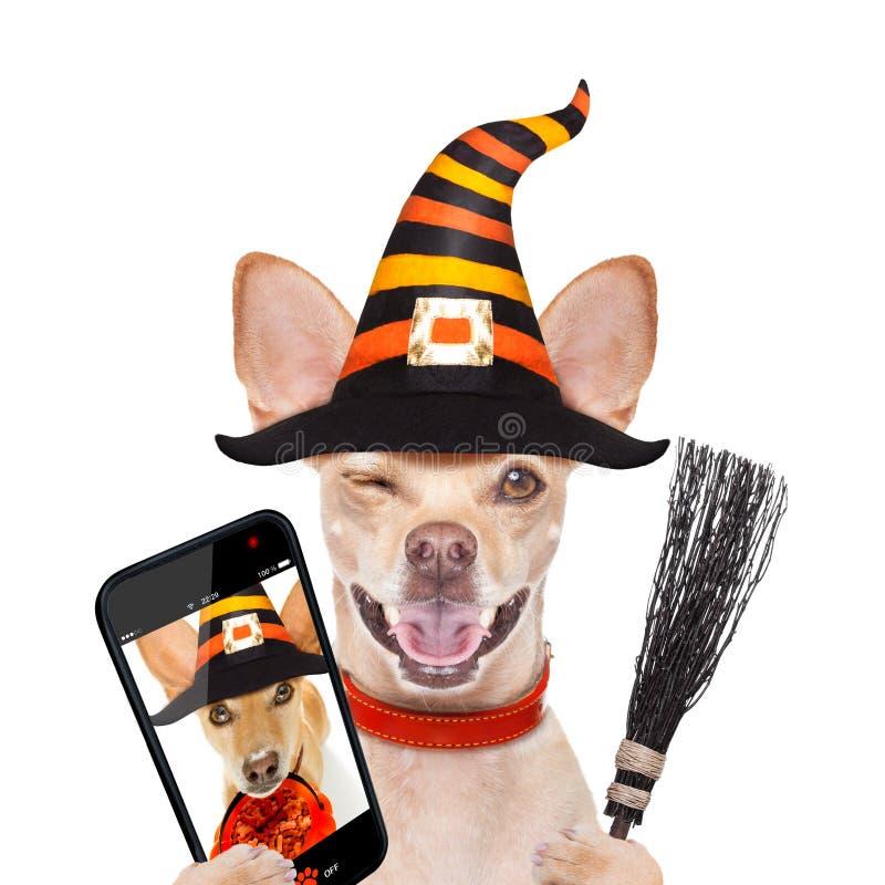 Truco o invitación del perro del fantasma de Halloween imagen de archivo libre de regalías