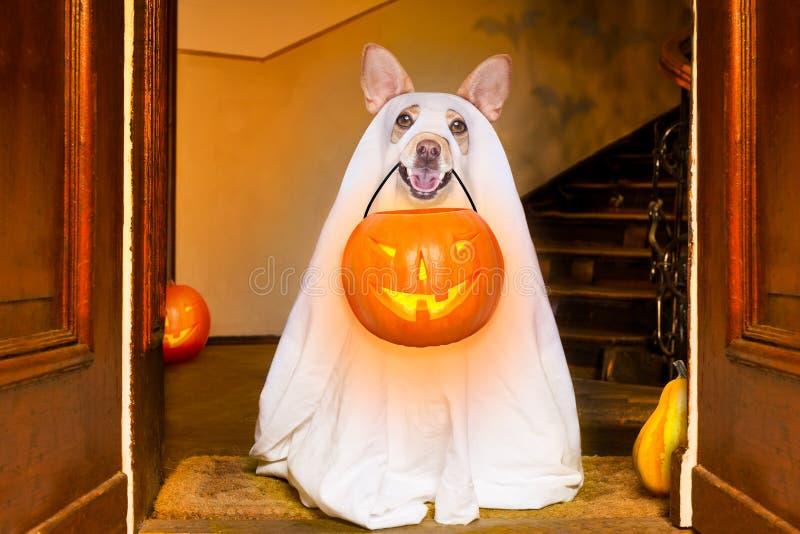 Truco o invitación del perro del fantasma de Halloween foto de archivo