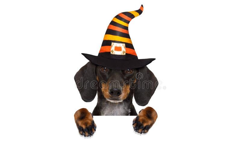 Truco o invitación del perro del fantasma de Halloween foto de archivo libre de regalías