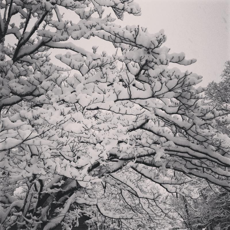 trudno śnieg obraz royalty free