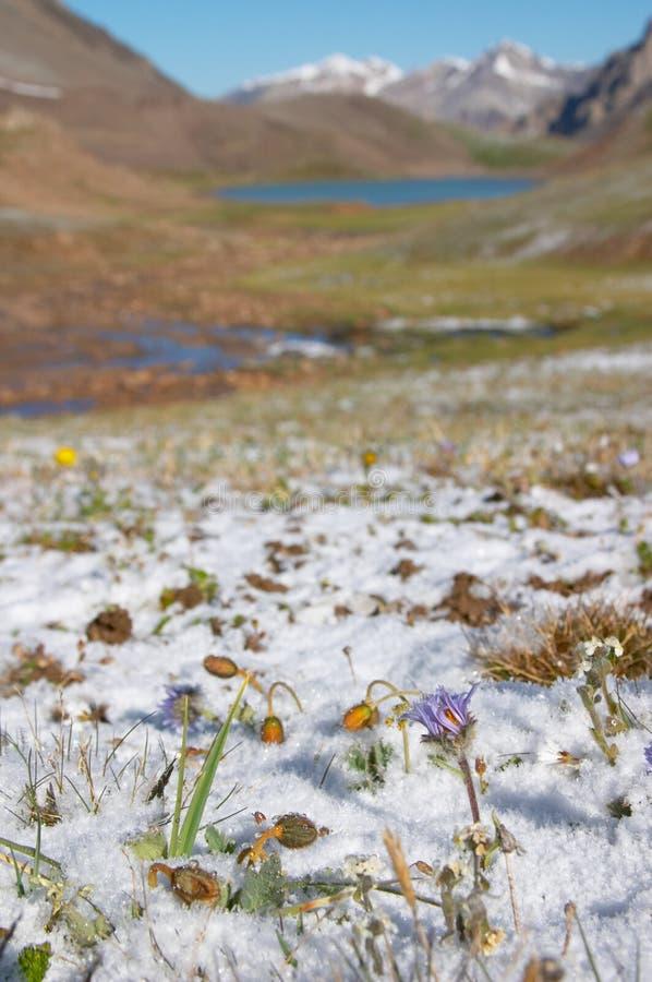trudno meadow rano góry śnieg obrazy stock