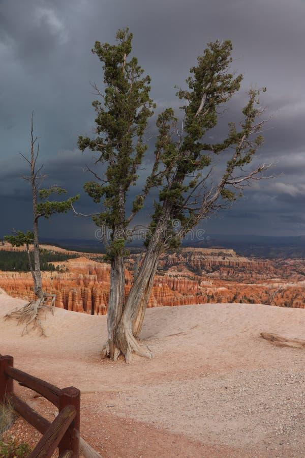 Trueno en Bryce Canyon, Utah, los E.E.U.U. fotografía de archivo libre de regalías