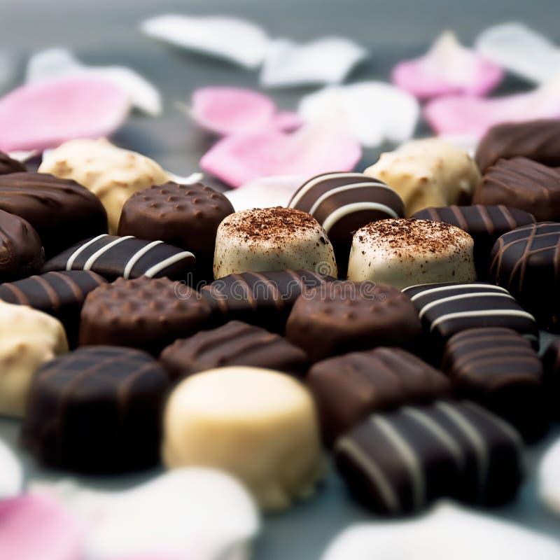 Trufas de chocolate e pétalas cor-de-rosa foto de stock royalty free