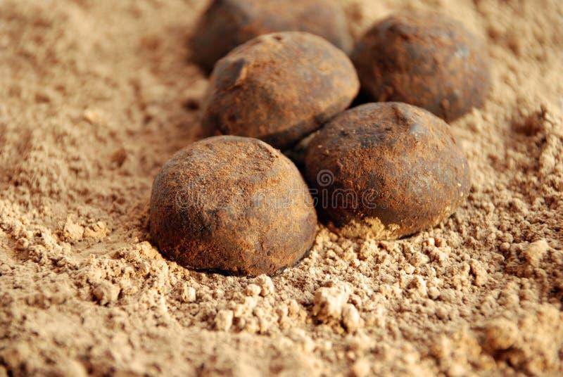 Truffle stock image